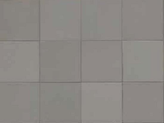 MEWS_Pigeon-11x11-rett.-2nd-choice